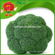 Brócolis frescos de boa qualidade