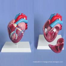 Modèle de démonstration d'anatomie médicale du coeur humain (R120105)