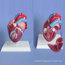 Human Heart Medical Anatomy Demonstration Model (R120105)