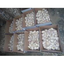 Qualité supérieure de l'ail blanc normal frais