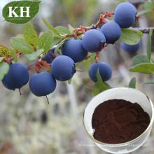 Extrait de bleuet naturel de haute qualité