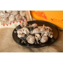 Cogumelo de flor de chá vegetal seco à venda