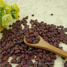 Chinese 2013 Crop haute qualité de niébé rouge (haricots de niébé)