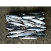 6-8 PCS / Kg Pescado congelado de la caballa