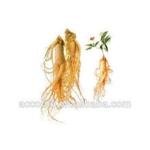 Fornecimento de óleo essencial de ginseng natural para cosméticos