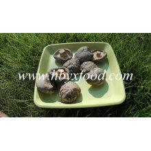 Getrockneter Gemüse-glatter Gesichts-Shiitake-Pilz