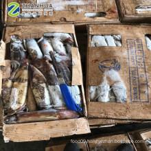 Frozen Black squid Sea Frozen Unfixed Weight Cheap Price