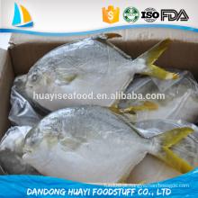 Peixes pompano congelados deliciosos e deliciosos à venda