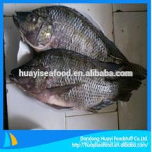 Gefrorener Fisch schwarzer Tilapia Großhandelspreis