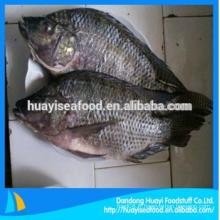 Prix de gros de tilapia noir de poissons surgelés