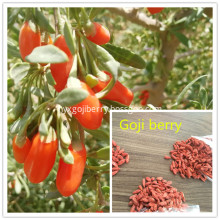 From Ningxia Goji berry samll grains and cheaper