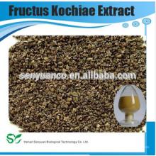 Fructus Kochiae Extraktpulver