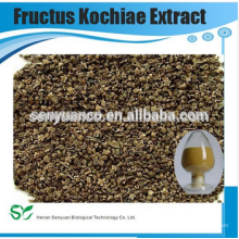 Fructus Kochiae extracto en polvo