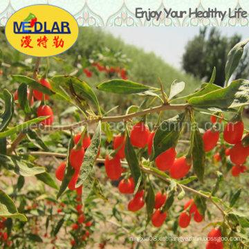 Suplemento alimenticio de la baya de Medlar Goji