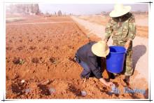 Get ton prices for agriculture Super absorbent polymer for vegetables