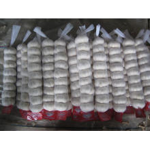 Small Mesh Bag Packing Pure White Garlic