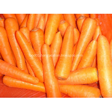 Health Food Carrot In Best Quality Competitive Price