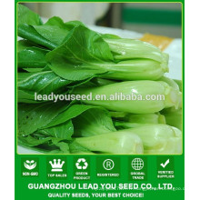 NPK09 Jieqi Chine pak choi graines industrie