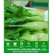 Indústria de sementes de pak choi NPK09 Jieqi China