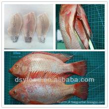 Congelado, vermelho, tilapia, peixe, inteiro, redondo