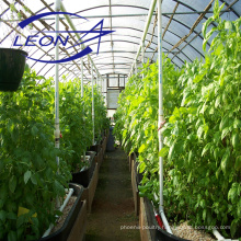 Leon series agriculture greenhouse equipment