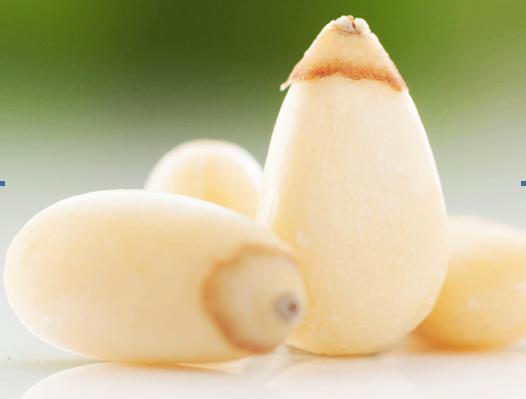 Pine Nut Kernel