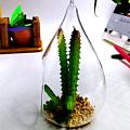 прозрачный стеклянный пузырь круглой формы подвесной стеклянный террариум