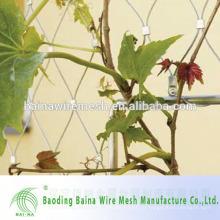 Зеленое растение, скалолазающее прочную сетку из нержавеющей стали