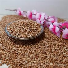 Nueva cosecha Sweet Buckwheat