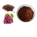 Supply Fruit Extract Organic OPC Grape Seed Extract