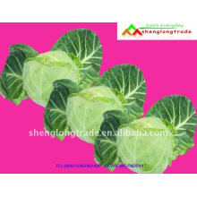 Cheap chinese fresh Round cabbage