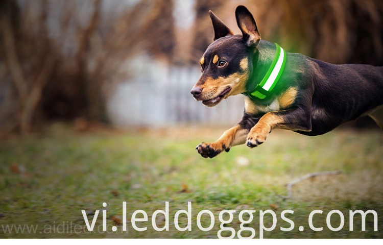 Dog Collars Led Lights