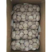 Hot Sale 1*10kg Normal White Garlic in Carton