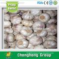 2016 fresh pure white garlic in China