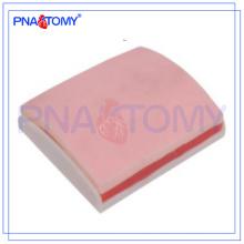PNT-TM003 Modelo avançado de prática de sutura de pele e músculo