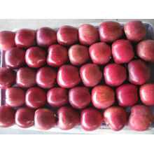 Fresh Huniu apple fruit for sale