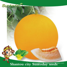Suntoday yellow rind agriculture orange-red flesh vegetable hs co hami known-you vegetable hybrid F1 melon japanese seeds(11019)