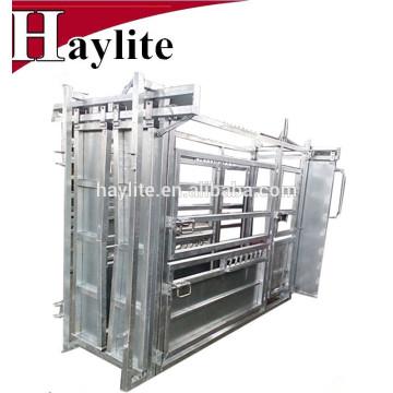 Équipement de manutention des bovins utilisé pour l'abattage intensif des bovins avec une balance