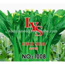 CS01 LJ 50 days early maturity green choy sum seeds for sowing