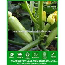 NSQ03 Jianda hybride graines de courge semences F1 fournisseur