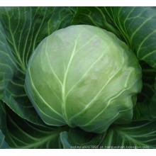 HC54 Kexue rodada sementes de repolho híbrido F1 verde escuro
