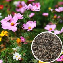 Bulk quantity Top quality mixed colors  Cosmos bipinnata flower seeds