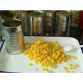 2016 Colheita de amêndoas de milho doce enlatadas
