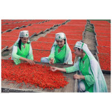 Baies de Goji Ningxia Organtic (Ningxia Wolfberry) (350 grains / 50g)