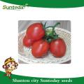 Suntoday rio grande determinado cereja vegetal sementes híbridas F1tomato Sgyanta orgânica GS-12 sementes de tomate cereja (22004)