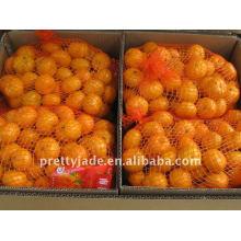 Frische Baby-Mandarine