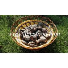 Gute Qualität getrockneter glatter Oberflächen-Shiitake-Pilz