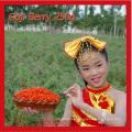 Las bayas orgánicas secas de Goji de Ningxia fortalecen la inmunidad