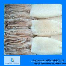 BQF clean frozen squid