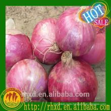 Fresh Shallot/ Red Onion Price Onion Seeds